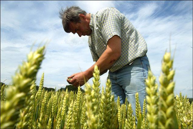 La agricultura del futuro producirá lo mismo con menos agricultores.